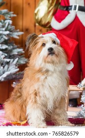 picture of a cute elo dog in front of christmas decoration
