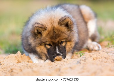 picture of a cute elo puppy that plays in a sand pit