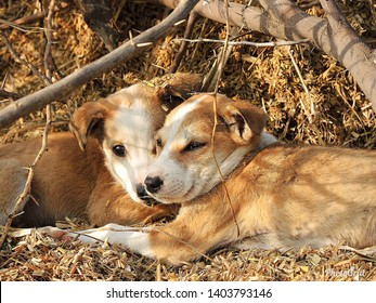 picture of cute puppies sunkissed.