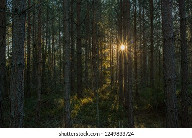A picture of a dark deep Scandinavian forest with a sun flare in the background