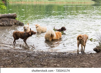 Picture of different dogs who are playing in a lake