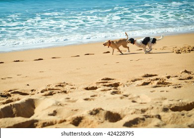 Picture of dogs chasing each other on the ocean sandy beach at sunset outdoors background