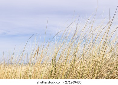 Picture of dune grass in sand on the coast of the Baltic Sea