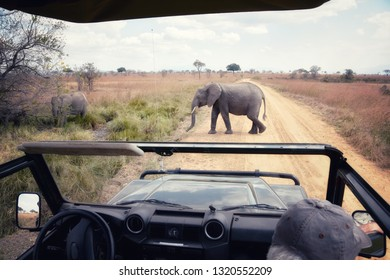 picture of an elephant crossing the road, with front of safari car in picture, Mikumi National Park, Tanzania, Africa.