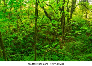 a picture of an exterior Pacific Northwest forest