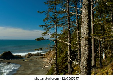 a picture of an exterior Pacific Northwest forest with Alaskan Sitka spruce trees