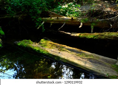 a picture of an exterior Pacific Northwest forest with conifer tree logs
