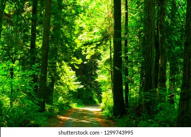 a picture an exterior Pacific Northwest forest hiking trail