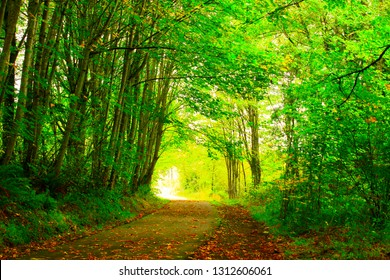a picture of an exterior Pacific Northwest forest Multi use path