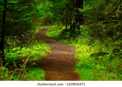a picture of an exterior Pacific Northwest forest trail