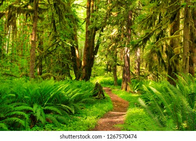 a picture of an exterior Pacific Northwest rainforest hiking trail