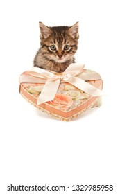 Picture of funny kitten with heart-shaped present box isolated on white