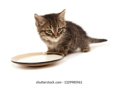 Picture of funny kitten with sour cream on his lips and plate with sour cream isolated on white