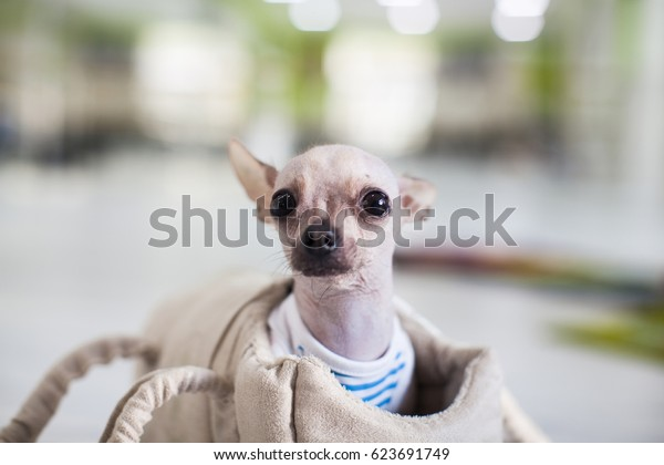 picture of a funny looking dog
