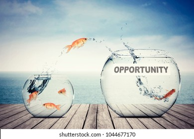 Picture of goldfish jumping out to better aquarium with opportunity text, concept of better opportunity
