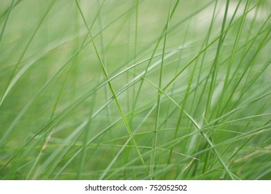 Picture of grass for background