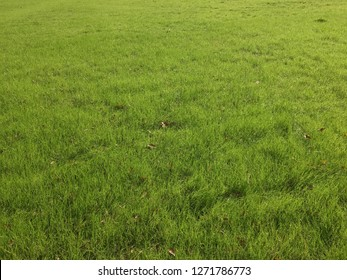 The picture of the green grass field. Even in winter time, some part in USA are still have pretty green. They are perfect for morning walk, it is good with bear feet touching the nature