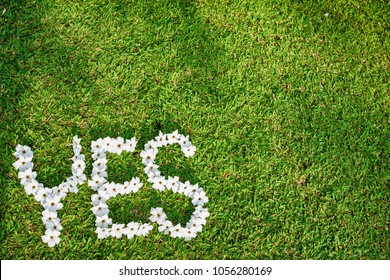 Picture of Green Lawn Write Yes With white flowers Focus on flowers