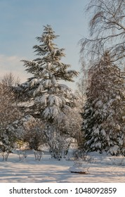 A picture of a group of snowy pines.