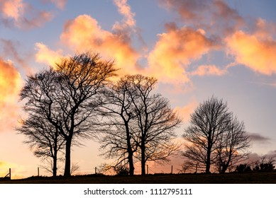 Picture of high contrasted  cloudscape with tree silhouette in foreground.