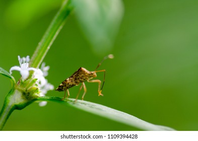 A picture of an insect that called as assasin bug doing some action on a leave