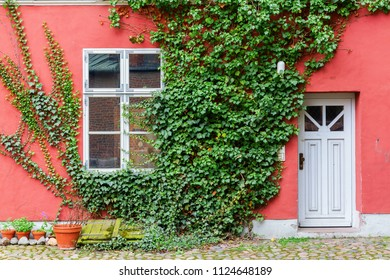 picture of an ivy covered house with a red wall