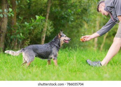 picture of a man who plays with an Australian Cattledog outdoors