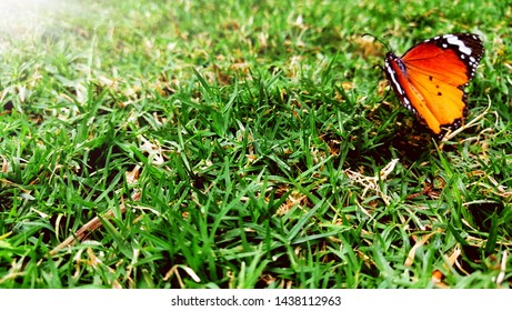 0d5809582cf9 Butterfly-picture Images, Stock Photos & Vectors | Shutterstock