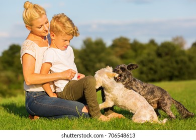 picture of a mother with her son playing with two small dog outdoors