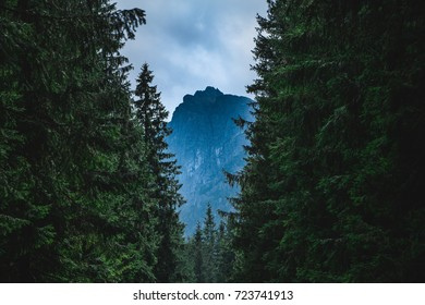 A picture of a mountain as seen between the forest (Tatra Mountains).