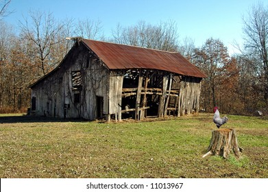 A picture of a old barn with a rooster calling from a tree stump