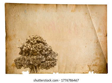 A picture of an old tree on paper