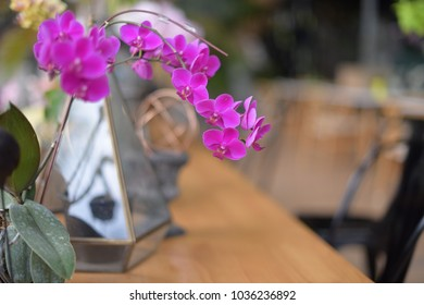 Picture of orchid can use for background