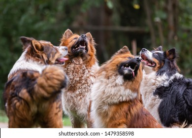 picture of a pack of cute elo dogs outdoors