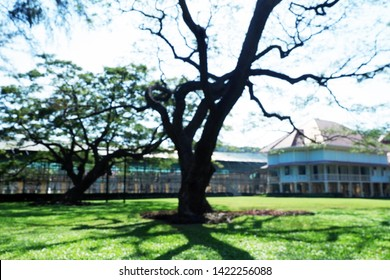 Picture of patio beautiful Frangipani tree stretching comfortably to luxury terrace gazebo green field - copy space center horizontal image