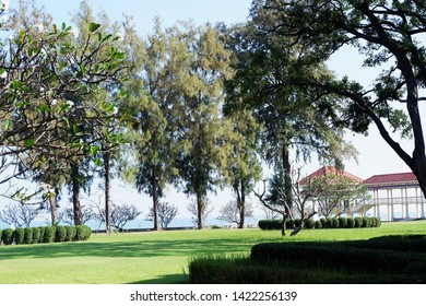 Picture of patio beautiful Frangipani tree stretching comfortably to luxury terrace gazebo with sea view - center horizontal image copy space