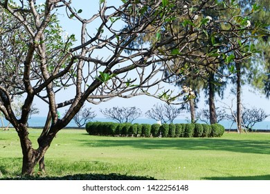 Picture of patio beautiful Frangipani tree stretching comfortably to luxury terrace gazebo with sea view- center horizontal image copy space