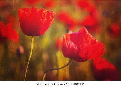 Picture of poppies with texture applied to it