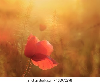Picture of a poppy in bloom