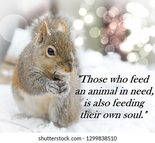 Picture quote: Those who feed animals in need, are also feeding their own soul-With a beautiful baby Kentucky' squirrel eating a sunflower seed in the cold snow with light bokeh all around. Typography