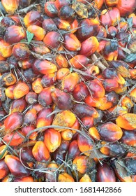 Picture of red palm oil