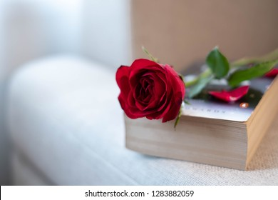 A picture of a rose on a book on sofa. This picture is suitable for such occasion as Valentine's day, romantic, sweet, dating, broken heart, lonely and so on. It can also be used as a text picture.