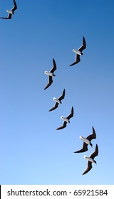 Picture of a seagulls