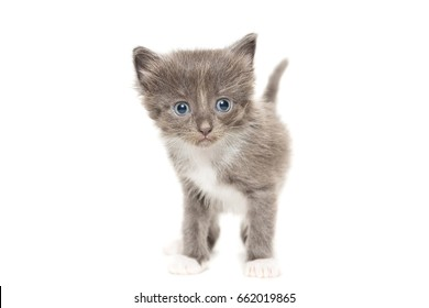 The picture shows a kitten on a white background