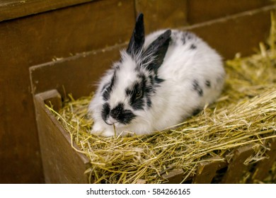 picture a small white rabbit sitting on straw