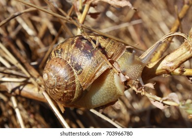 Picture of snail with shell