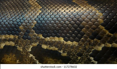 Picture of a snake skin with an interesting pattern