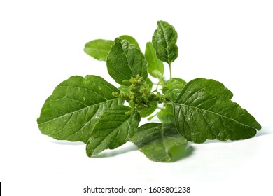 Picture of spinach / Amaranthus spp. leafs that usually used for cooking. Shoot on a white isolated background.