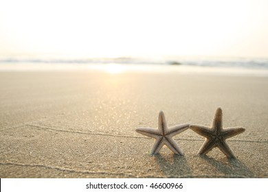 picture of starfish on the beach in the sand