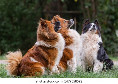 picture of three elo dogs who look up to their master